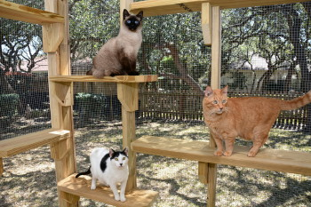 Perched High On A Shelf Surveying The Yard, Or Studying A Squirrel Face To  Face, Your Cats Will Love Having Access To The Outdoors And Youu0027ll Love  Knowing ...