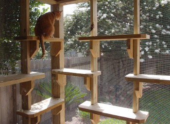 Bon Perched High On A Shelf Surveying The Yard, Or Studying A Squirrel Face To  Face, Your Cats Will Love Having Access To The Outdoors And Youu0027ll Love  Knowing ...